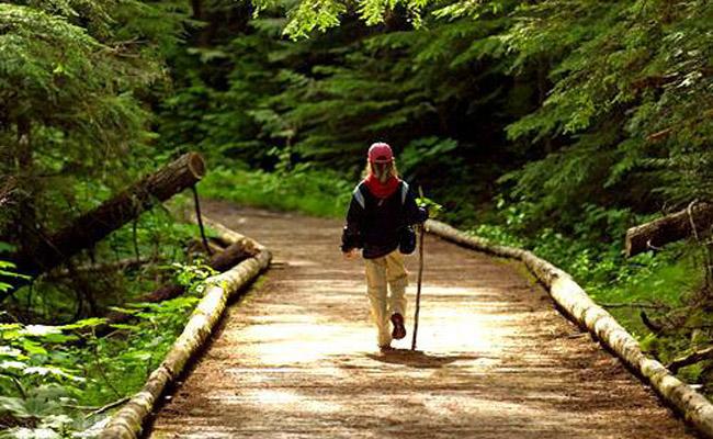 img-blog-walking-path